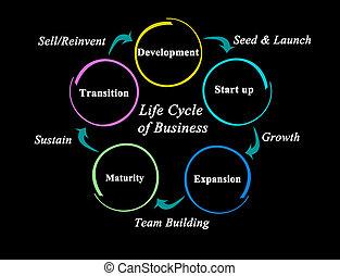 vida, cinco, ciclo, negócio, fases