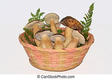 vida, comestível, boletus, cogumelos, ainda, edulis