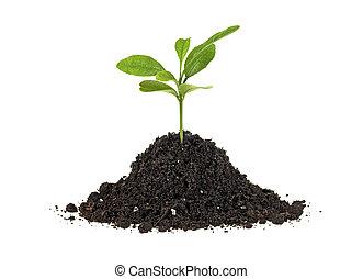 vida, conceito, solo, -, planta, experiência., verde, novo, crescendo, pequeno, branca, montão