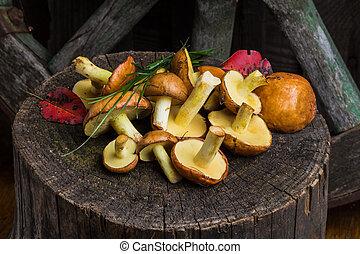 vida, de, amarela, boletus, cogumelos