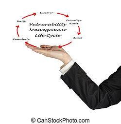 vida, dirección, ciclo, vulnerabilidad