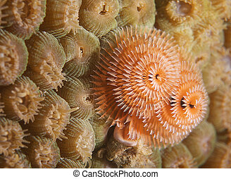 vida, estrella, coral., árbol, gusano, naranja, navidad...