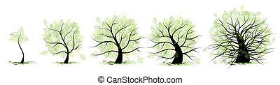 vida, etapas, de, tree:, niñez, adolescencia, juventud, edad...