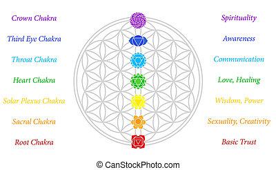 vida, flor, descripción, chakras
