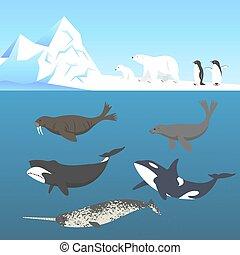 vida, frío, conjunto, animales, bowhead, polar, climate., ...