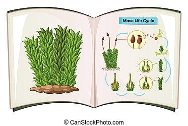 vida, livro, mostrando, musgo, ciclo