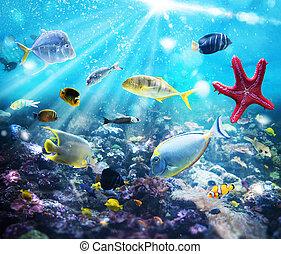 vida, marina