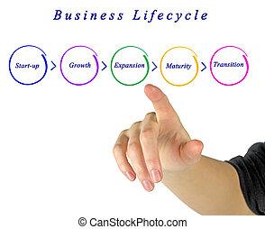 vida, negócio, ciclo