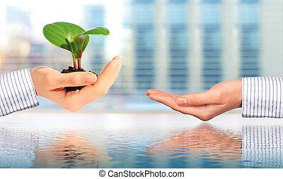 vida nova, concept., plant.