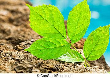 vida nova, planta verde