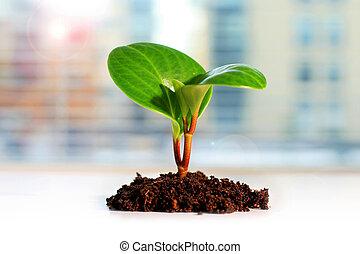 vida nova, verde, concept., plant.
