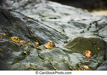 vida, pedras