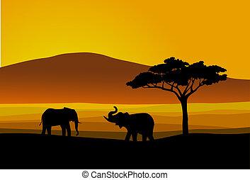 vida selvagem, áfrica