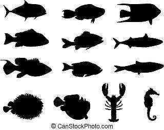 vida, siluetas, mar, pez