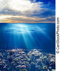vida submarina, cielo, océano, ocaso, mar, o