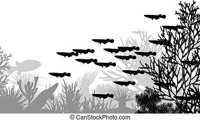 vida submarina