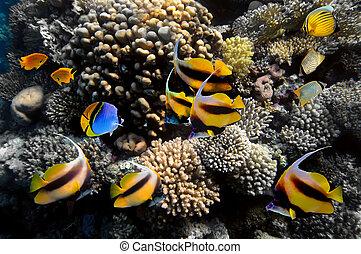 vida submarina, de, un, hard-coral, arrecife