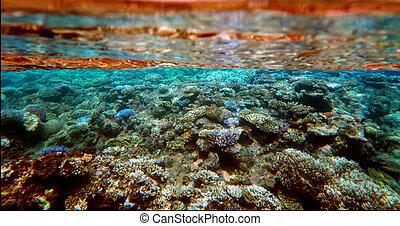 vida submarina, marina