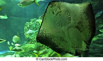 vida submarina, marina, vista