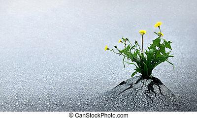 vida, triunfos, contra, todos, probabilidades
