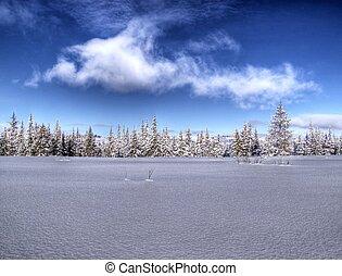 vidd, av, snö, på, a, solig dag