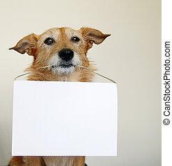 vide, chien, signe