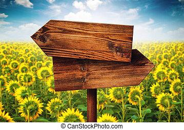 vide, rustique, opposé, direction, bois, signe, dans, champ tournesol
