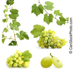 videira, colagem, folhas, uvas verdes