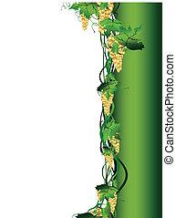 videira uva, ilustração, dourado