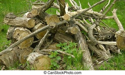 Big pile of oak wood on the forest