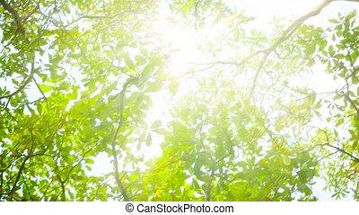 Blinding sun through tree leaves