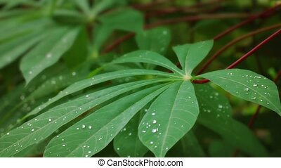 Leaves of tropical plant with drops of water swaying in the wind