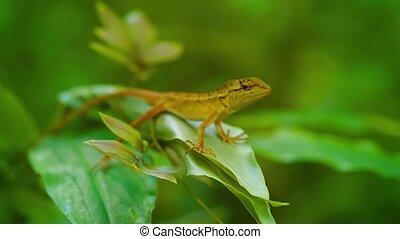 Small wild lizard sitting on a tropical plant. Thailand, Phuket Island