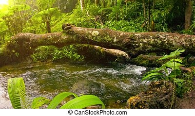 Stream in tropical forest among the snags. Thailand
