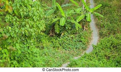 The path through the rainforest. Thailand, Phuket
