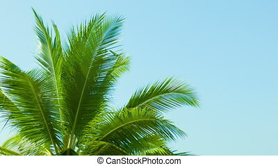 Top of the palm tree on blue sky background