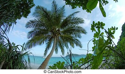Beautiful coconut palm tree at the tropical beach. Thailand.