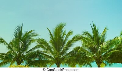 Blue sky above the tops of coconut trees on a tropical beach