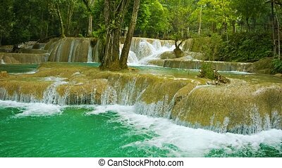 Forest Kouang Si Waterfall. Laos - Video 1920x1080 - Forest...