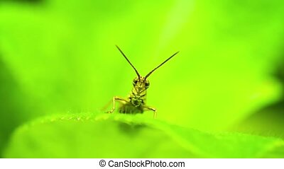 Small grasshopper sitting on a leaf of a plant close up