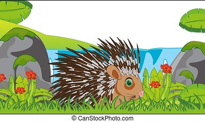 Video animation animal porcupine in jungle in herb - Animal...