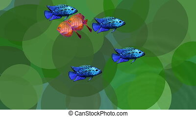 Video animation orange and blue exotic fishes in green...