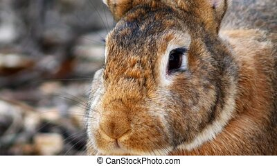 Video clip nose of an animal rabbit close-up macro video shooting