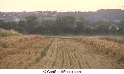Harvested Grainfield