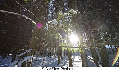 Winter Wonderland With sun - Video footage of a Winter...