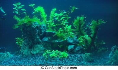 Video of aquarium with plants at evening.