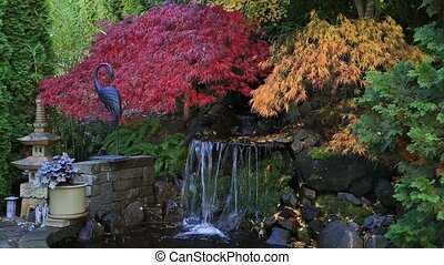 Video of colorful laced maple trees over water feature in garden fall season HD