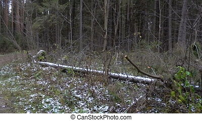 Video of forest frozen mess in late autumn