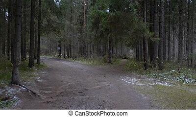 Video of forest landscape