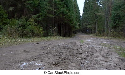 Video of forest pathway